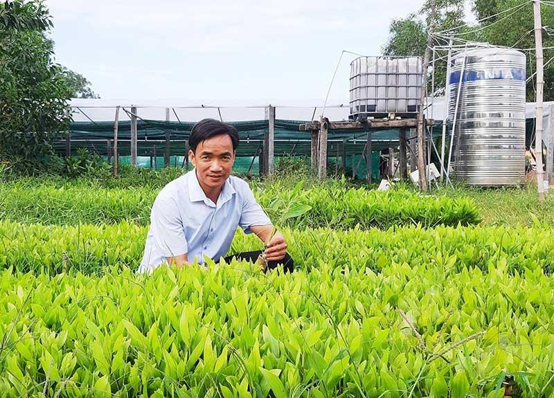 Mô hình ươm giống cây lâm nghiệp của ông Huỳnh Tấn Đồng mang lại hiệu quả kinh tế cao. Ảnh: H.N