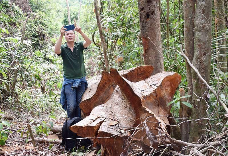 CTV Thanh Thắng tại hiện trường một vụ phá rừng. Ảnh: N.V.C.C