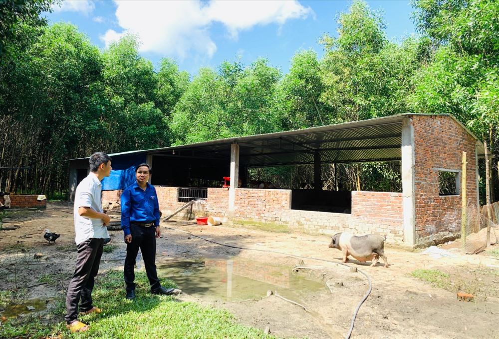 Trang trại nuôi heo và gà theo hướng hữu cơ của anh Nguyễn Xuân Tịnh. Ảnh: PHAN VINH