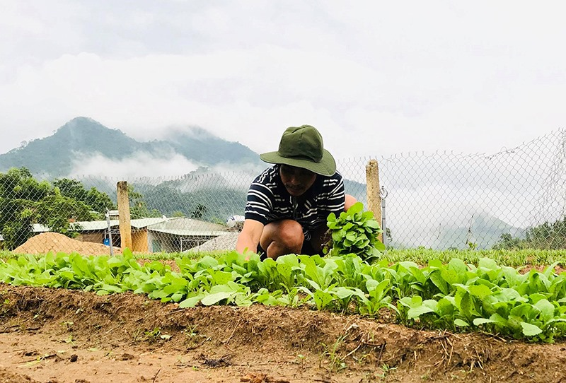 Giáo viên Trường Phổ thông Dân tộc bán trú tiểu học Trà Tập trồng rau để cải thiện bữa ăn cho học sinh. Ảnh: T.T