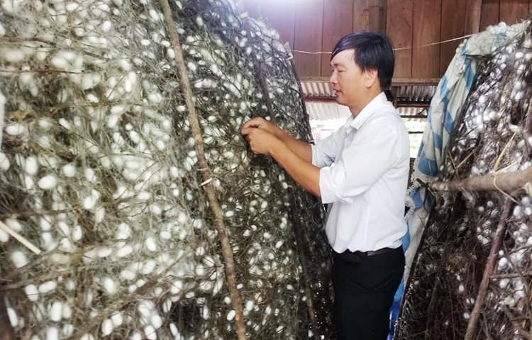 Nhiều hộ dân đến nay vẫn còn giữ nghề trồng dâu nuôi tằm và có thu nhập cao. Ảnh: THÔNG VINH