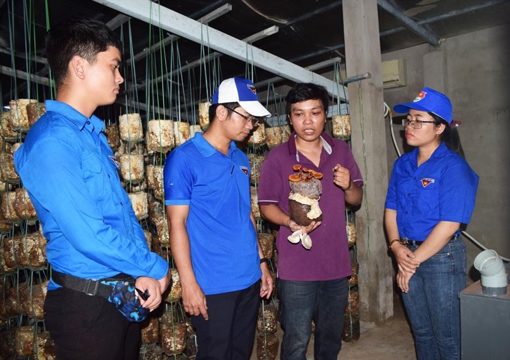 Đoàn viên thanh niên tham quan mô hình trồng nấm của anh Nguyễn Sư Dũng (xã Đại Lãnh, Đại Lộc). Ảnh: THÁI CƯỜNG