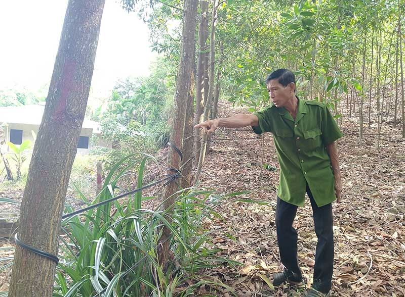 Ông Nguyễn Quang Vinh chỉ hàng rào dứa do bà Hạnh thuê người trồng phân định ranh giới đất giữa hai hộ. Ảnh: H.G