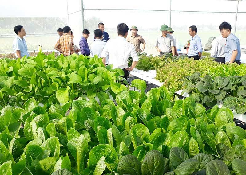 Nhiều mô hình nông nghiệp tại Tam Kỳ được mở rộng quy mô sản xuất từ các nguồn vốn thông qua hội nông dân. Ảnh: T.Q