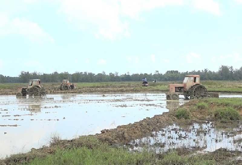 Bắt đầu từ vụ đông xuân 2019, Bình Nam tiếp tục thực hiện tích tụ tập trung ruộng đất tại cánh đồng 20ha thuộc tổ 3 và 4, thôn Thái Đông. Ảnh: S.T