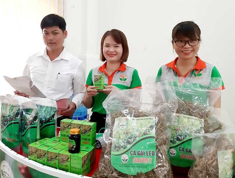 Một số sản phẩm chế biến từ cà gai leo được Công ty CP Nghiên cứu & Phát triển Dược liệu Đại Việt trưng bày tại hội thảo. Ảnh: M.L