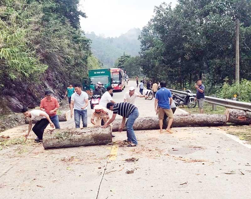 CSGT tham gia dọn dẹp hiện trường cây gỗ lớn ngã đổ trên đường Hồ Chí Minh. Ảnh: P.G