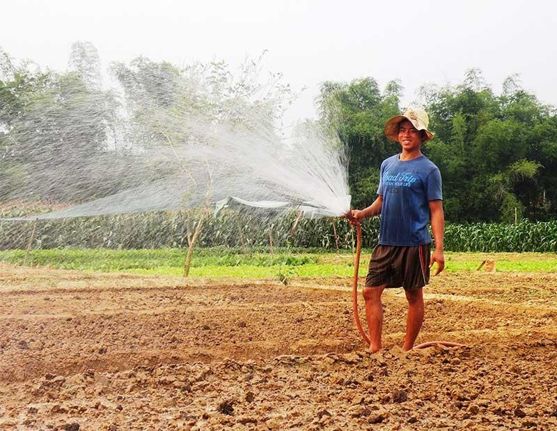 Nhờ chú trọng thủy lợi hóa đất màu, người dân xã Điện Minh (Điện Bàn) rất thuận lợi trong việc sản xuất các loại cây trồng cạn theo phương thức hàng hóa tập trung. Ảnh: T.R