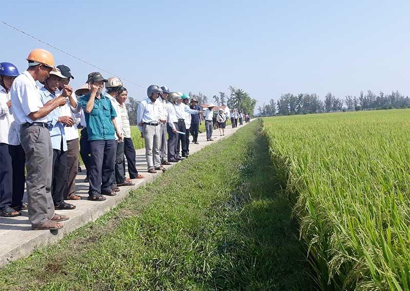 Cán bộ kỹ thuật và nông dân cùng kiểm tra mô hình CSA trên cây lúa trong vụ hè thu 2019. Ảnh: M.T
