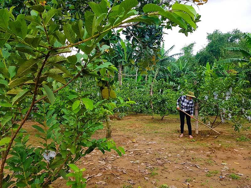 Bám đất, bám làng cũ Phương Trung, người dân địa phương đặc biệt kỳ vọng vào dự án làng du lịch sinh thái. Ảnh: T.C