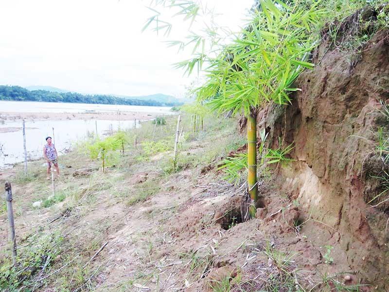 Bờ sông Thu Bồn, đoạn qua xã Đại Thạnh, Đại Lộc bị sạt lở nghiêm trọng, hình thành những vách đứng. (Ảnh chụp tại Đại Thạnh vào cuối năm 2018). Ảnh: H.LIÊN