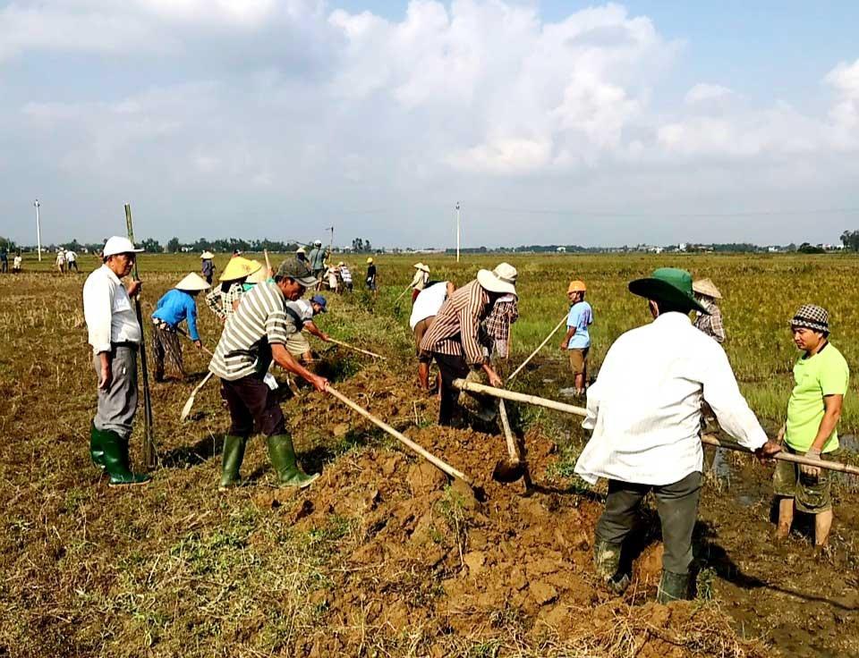 Thời gian qua, nông dân nhiều địa phương tích cực ra quân diệt chuột trước khi triển khai gieo sạ trà 1 vụ lúa đông xuân. Ảnh: N.P