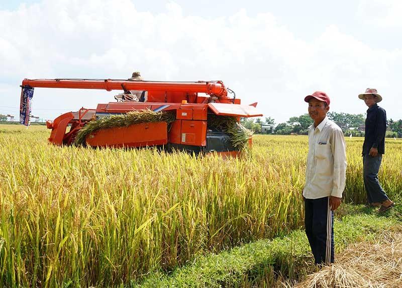 Phú Ninh ngày càng nhiều cánh đồng thu nhập cao. Ảnh: B.H