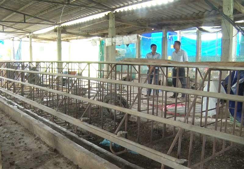 Đã 3 tháng trôi qua, ông Lê Tấn Đạt bỏ hoang chuồng trại vì thiếu vốn tái đàn mặc dù có thể đáp ứng các điều kiện theo quy định. Ảnh: Đ.Q