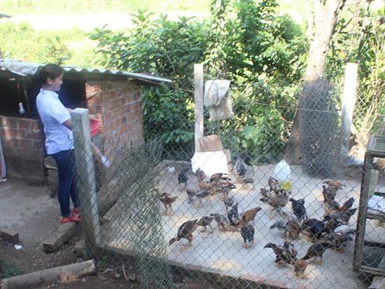 Mô hình nuôi gà ta thả vườn ở Tam Thạnh cho hiệu quả kinh tế cao. Ảnh: V.P