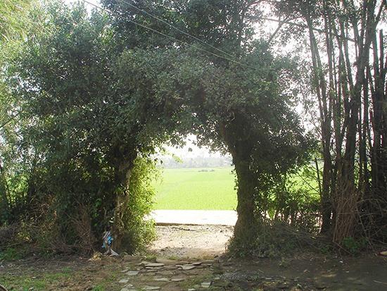 Một cổng vào nhà ở thôn Thuận An làng Hòa Mỹ Tây xưa.