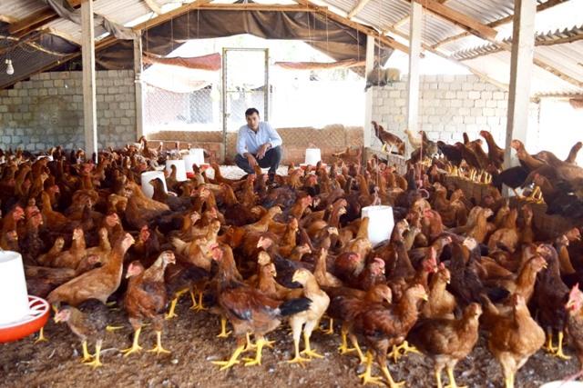 Mô hình nuôi gà theo phương pháp bán chăn thả, áp dụng kỹ thuật đệm lót sinh học của anh Mai Văn Thuật. Ảnh: THÁI CƯỜNG