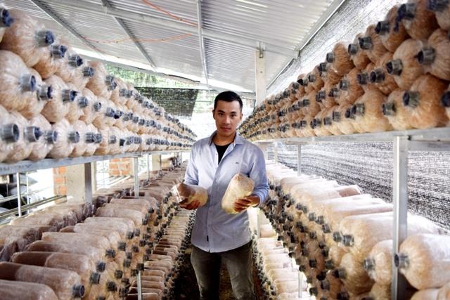 Anh Thuật trồng thêm nấm bào ngư xám để tăng thu nhập và tận dụng phế phẩm nông nghiệp. Ảnh: THÁI CƯỜNG