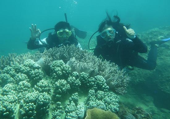 Diving là loại hình du lịch biển thích hợp tại Cù Lao Chàm.