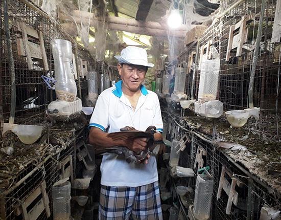 Gia trại nuôi bồ câu lai Pháp của cựu binh Nguyễn Phước Sáu (Điện Phước). Ảnh: NHAN PHƯƠNG