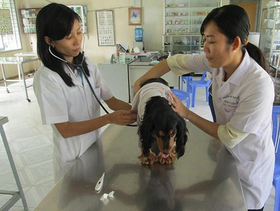 Cần kiểm soát việc nuôi chó mèo tránh tình trạng phát tán các ấu trùng giun sán... Ảnh: ITN