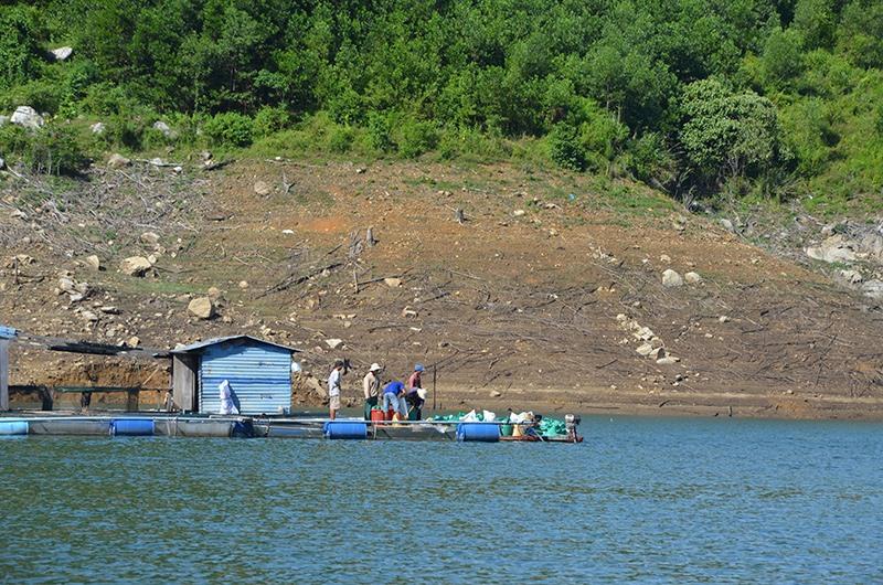 Nuôi cá lồng bè phát triển mạnh ở lòng hồ thủy điện Sông Tranh 2. Ảnh: T.H