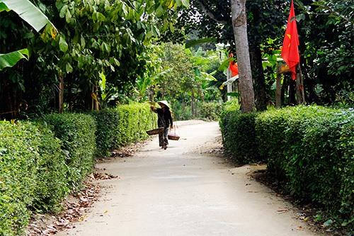 Bình yên làng quê Đại Bình. Ảnh: SONG ANH