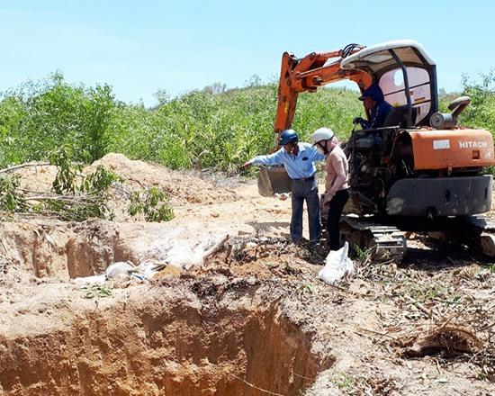Đào hố tiêu hủy heo nhiễm dịch tại xã Quế Xuân 1 (Quế Sơn).