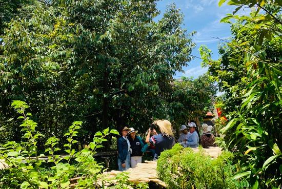 Du khách tham quan vườn cây ăn trái. Ảnh: PHAN VINH