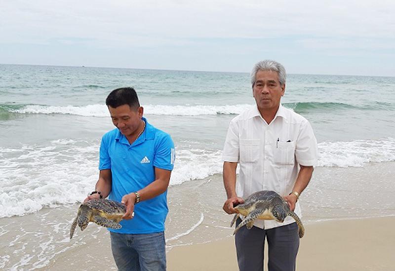 Ông Nguyễn Văn Hương - Phó Chủ tịch UBND huyện Thăng Bình (áo trắng) và anh Trần Thanh Ba thả 2 cá thể rùa biển về với tự nhiên. Ảnh: TÂN BIÊN