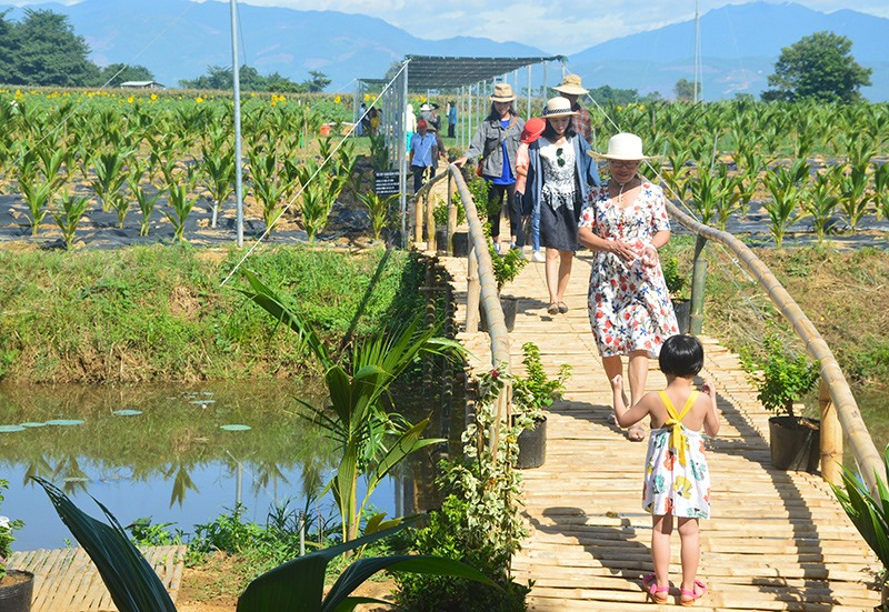Nhiều khu vực làng quê trên địa bàn tỉnh có tiềm năng lớn để khai phá, cải tạo phục vụ phát triển du lịch nông nghiệp. Ảnh: Q.T