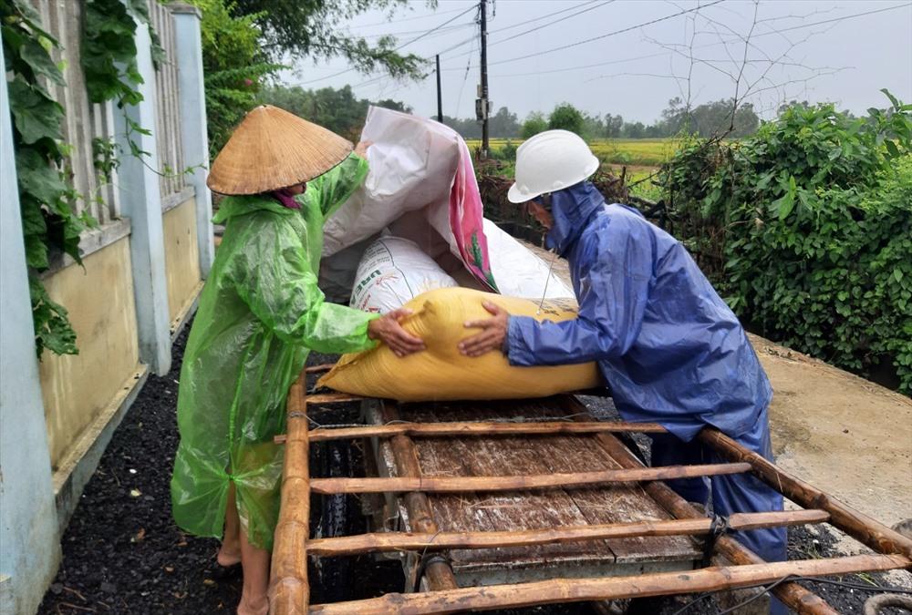 Người dân Phú Ninh khẩn trương thu hoạch đưa lúa về nhà. Ảnh: THANH THẮNG