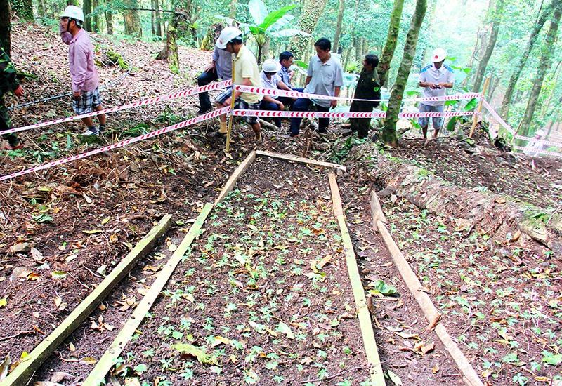 Du khách tham quan vườn sâm giống Tắk Ngo. Ảnh: Đ.N