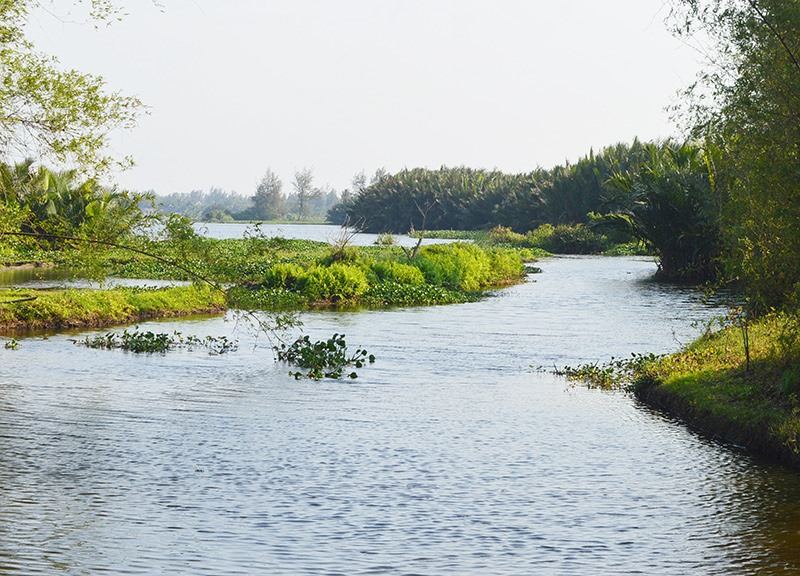 Một đoạn sông Cổ Cò qua phường Điện Dương, thị xã Điện Bàn. Ảnh: Q.T
