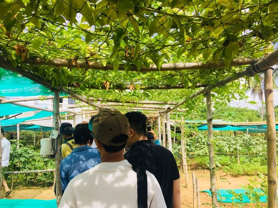 Visitors to Thanh Dong organic farm. Photo: cand.com.vn