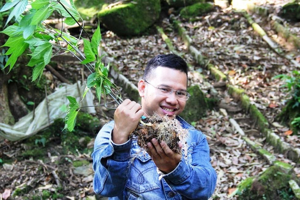 A Ngoc Linh ginseng tree.