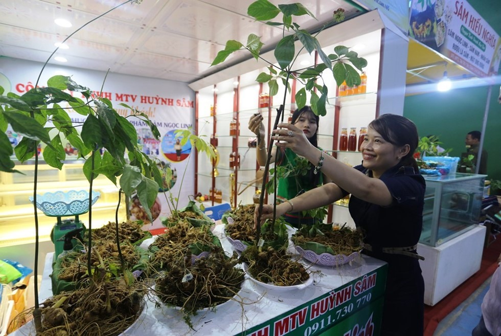 Ngoc Linh ginseng fair is monthly held in Nam Tra My.