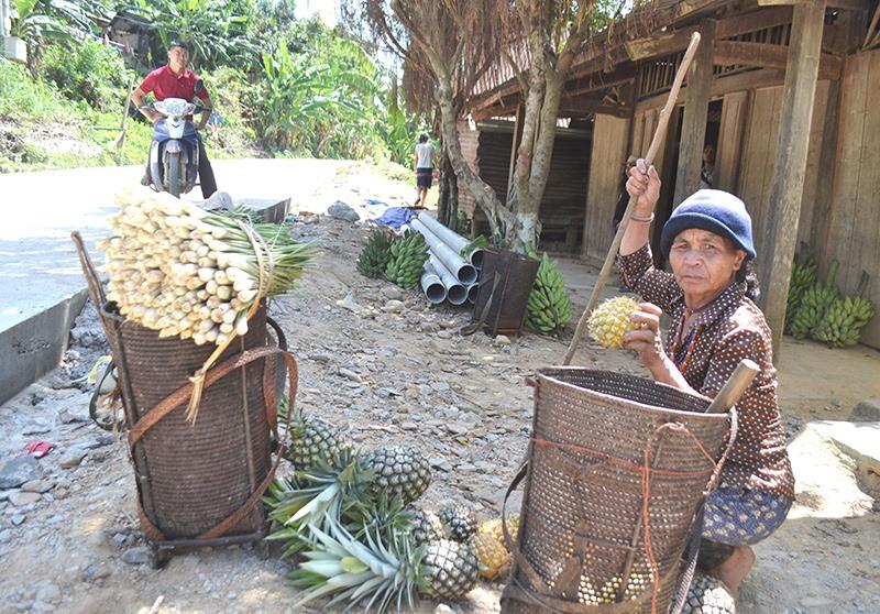 Phát triển kinh tế, mang lại thu nhập ổn định cho đồng bào là mục tiêu mà huyện Đông Giang hướng đến trong xây dựng NTM. Ảnh: C.T