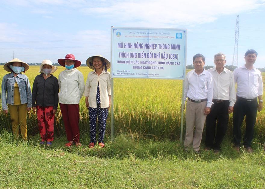 Mô hình trồng lúa thich ứng biến đổi khí hậu ở Núi Thành. Ảnh: Văn Phin
