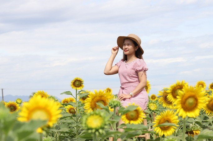 It is the first sunfower garden in Quang Nam, so everyone feel eager to visit and take photos.