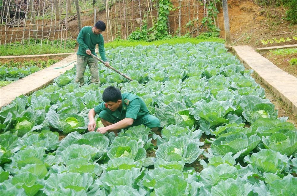 Khu tăng gia sản xuất của Đồn Biên phòng Ga Ry được trồng rất nhiều loại rau, củ quả thực phẩm sạch đảm bảo phục vụ Tết cho bộ đội.