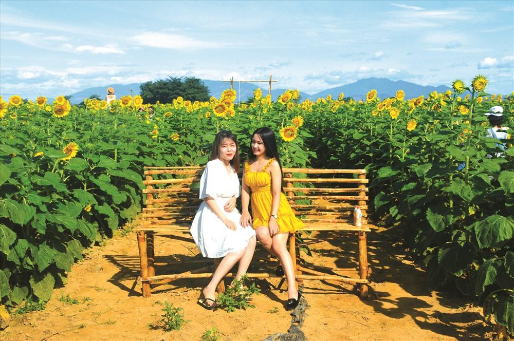 Cánh đồng hoa hướng dương được kỳ vọng sẽ giúp du lịch nông nghiệp tại vùng Gò Nổi (Điện Bàn) có sức bật mới. Ảnh: S.T