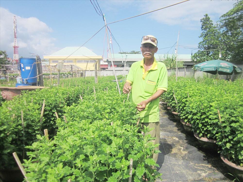 Các chủ nhà vườn hoa ở Cẩm Châu đang hối hả chăm sóc vụ hoa tết.
