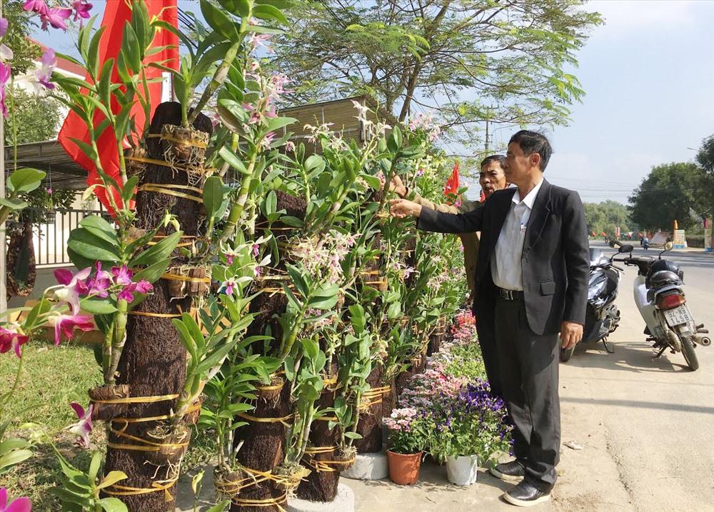 Hoa lan của anh Bùi Đoàn Hải bày bán tại chợ hoa xuân huyện Phú Ninh. Ảnh: H.C