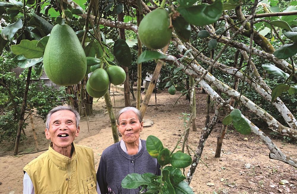 Ông Trần Hưng là người khá am hiểu về Đại Bình và nguồn gốc cây bưởi trụ. Ảnh: PHAN VINH