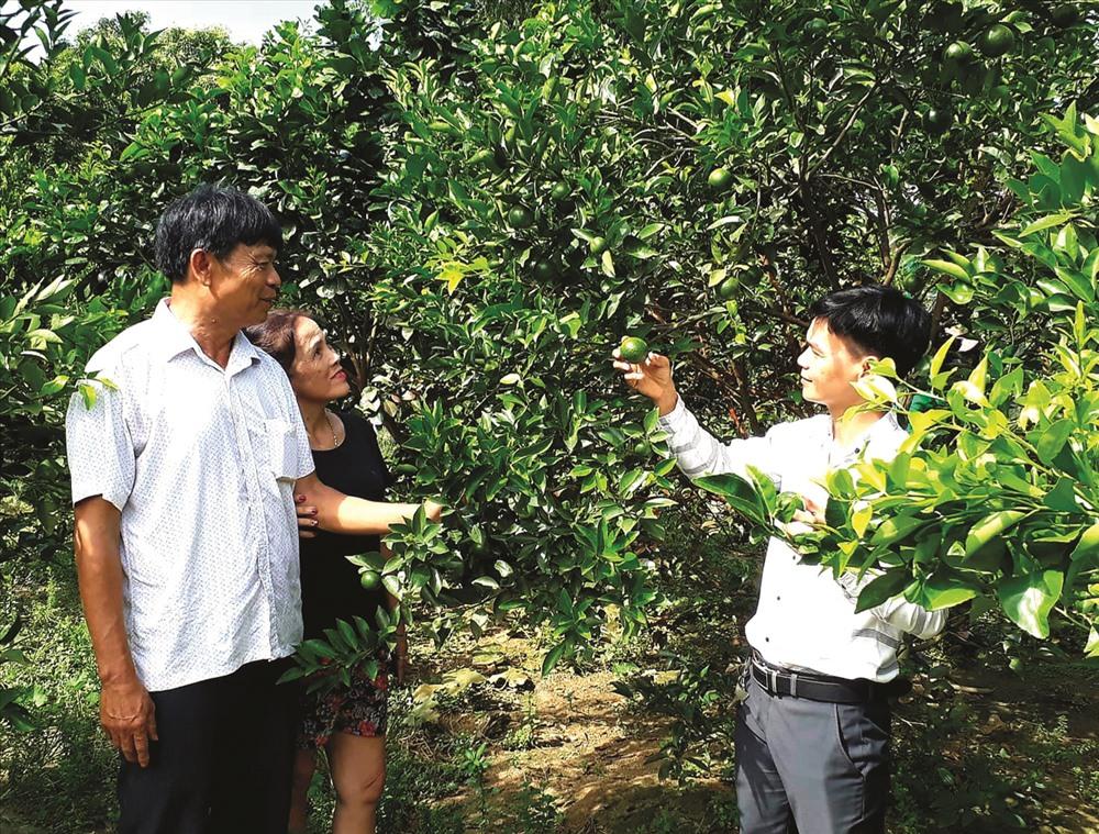 Mô hình vườn mẫu tạo cảnh quan nông thôn sạch đẹp và góp phần nâng cao thu nhập cho người dân. Ảnh: VĂN SỰ