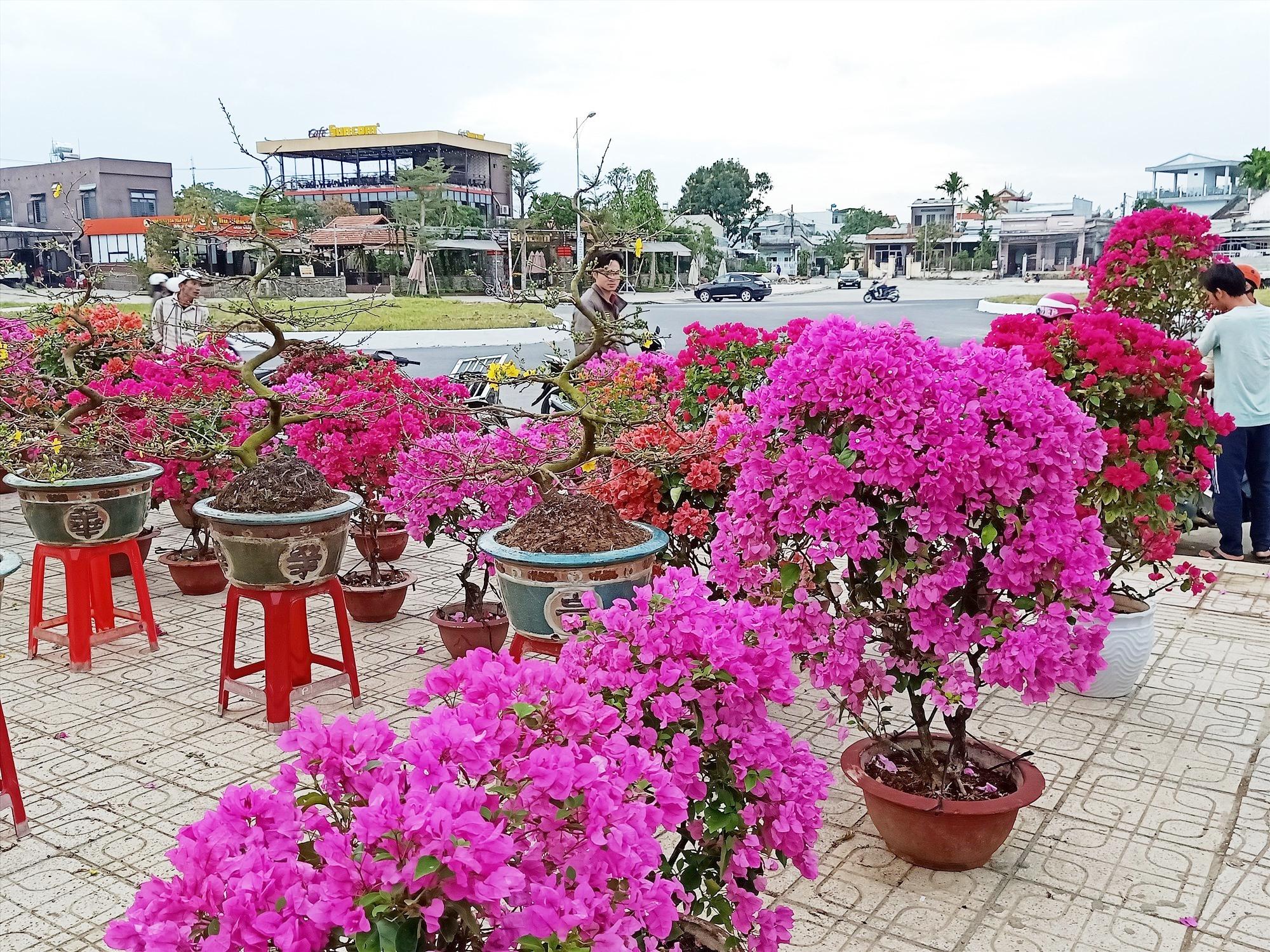 Ngoài quật chậu, cúc chậu, thược dược thì hoa giấy ngoại đủ màu lạ và đẹp, có giá mềm tại chợ hoa với lượt mua rải rác. Ảnh: H.LIÊN
