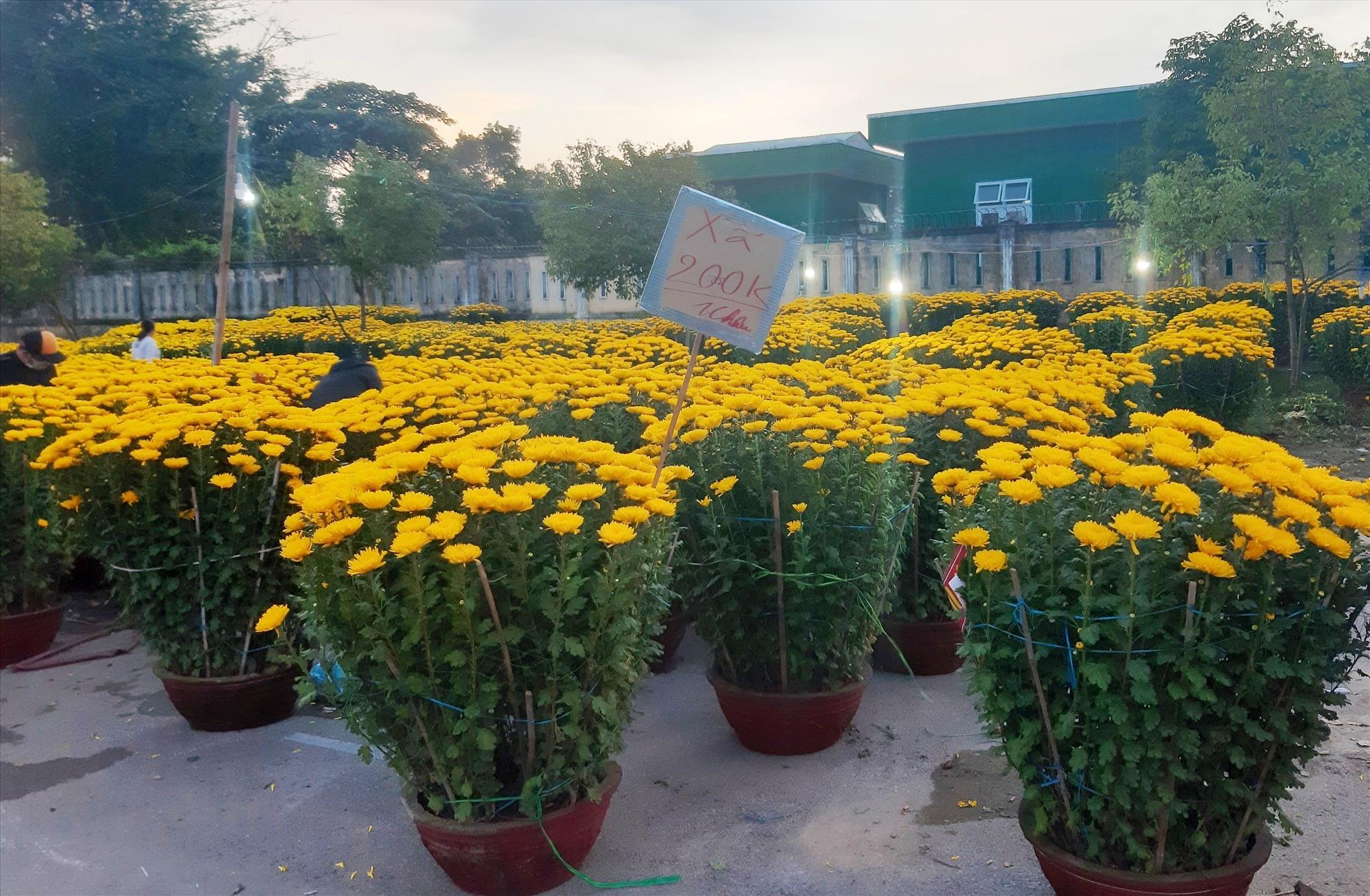 Chiều tối ngày 30 tháng Chạp, tại điểm bán hoa xuân phường An Mỹ vẫn còn rất nhiều hoa. Ảnh: THANH THẮNG