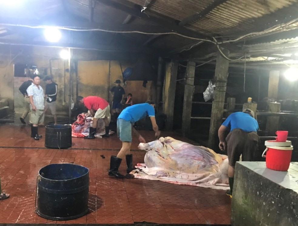 Lực lượng chức năng phát hiện cơ sở có hành vi bơm nước vào bò trước khi giết mổ. Ảnh: Công an cung cấp