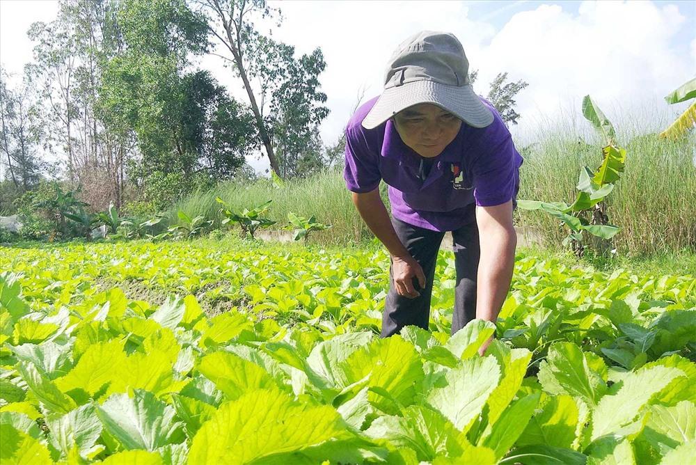 Mơn mởn ruộng rau của Hợp tác xã Nông nghiệp Kỳ Anh. Ảnh: HOÀNG BIN